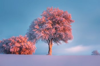 winter-1835616__340.jpg